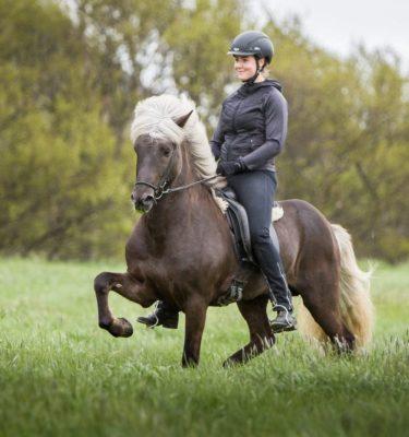 Sólbjartur frá Kjarri icelandic horse stallion