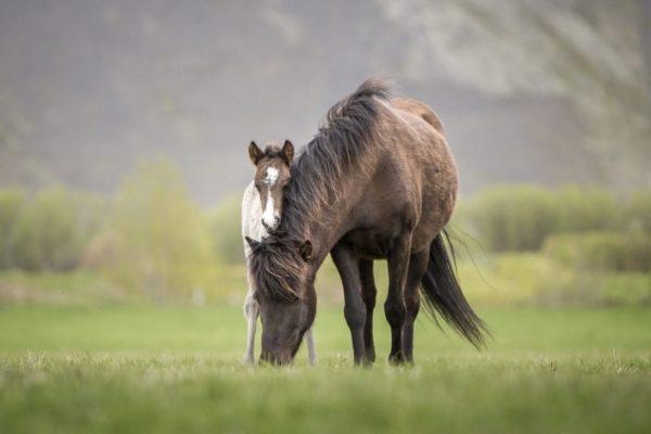 Sprengja frá Kjarri foal