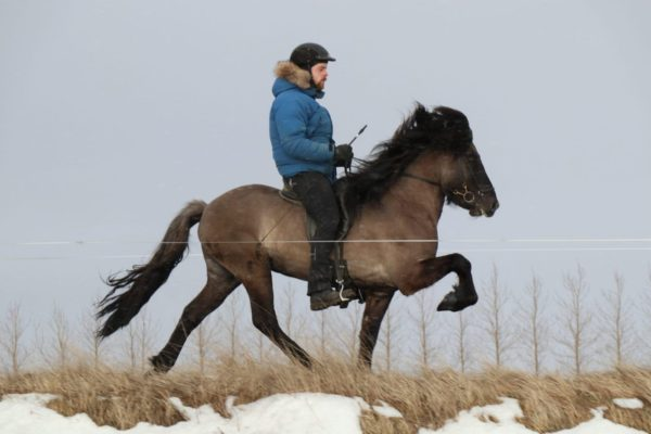 Máfur frá Kjarri og Ólafur Andri